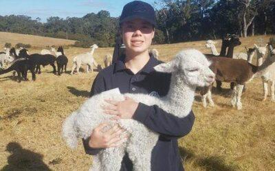 Meet Young Alpaca Judge Mia Hancock (WA)