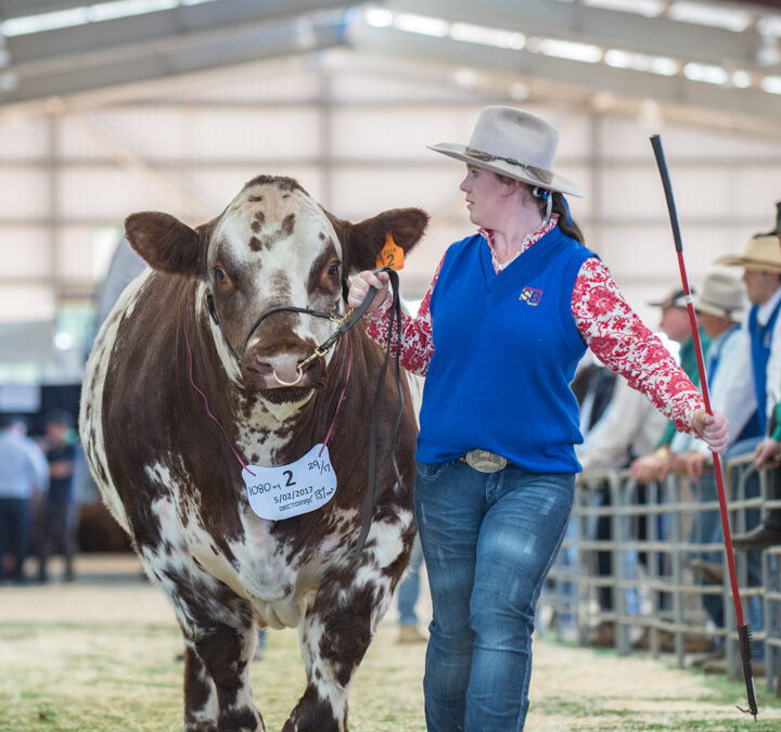 Meet Young Beef Cattle Judge Sarah Sutton (Vic)