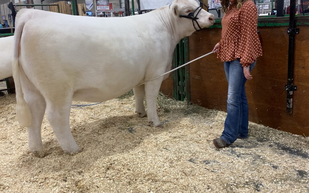 Meet Young Beef Cattle Parader Alizah Fogden (SA)