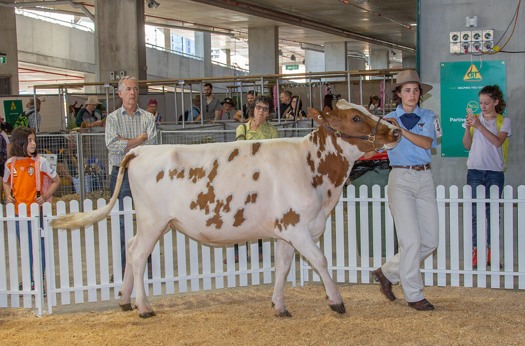 Cream of the crop in young dairy enthusiasts set for national finals